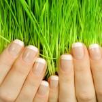 Weizengras – Das kleine Power-Paket aus der Natur