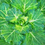 Green Smoothies – 3 Empfehlungen für die Zubereitung