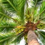 Schön & Gesund mit Kokosöl